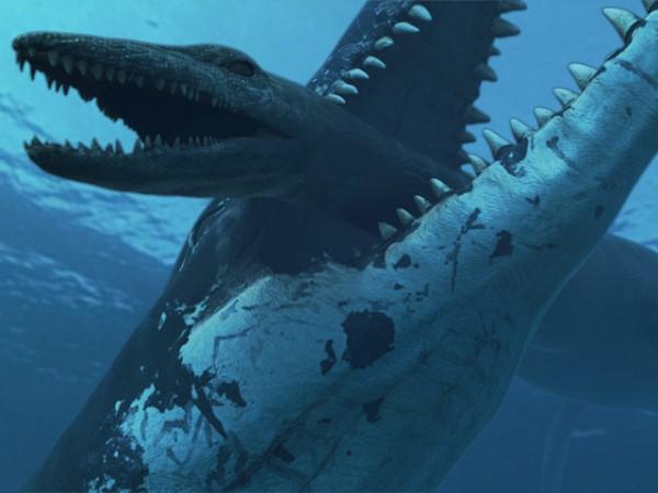 какое самое мощное морское животное
