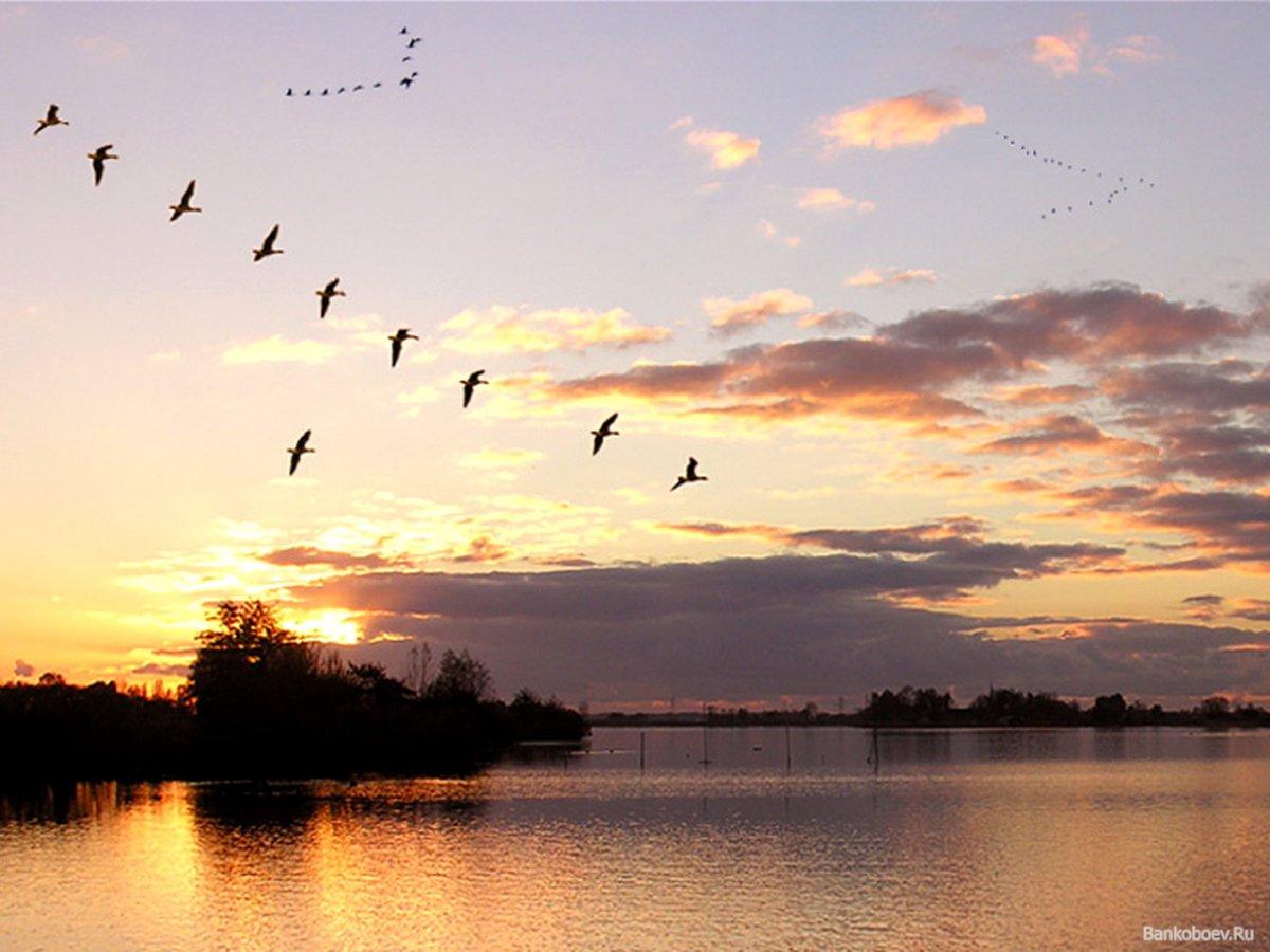 Птицы улетающие на юг