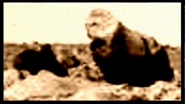 На Марсе «нашли» гориллу с детенышем