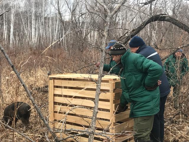 Впроцессе операции «Мазай» вПриамурье спасли зайцев икосуль