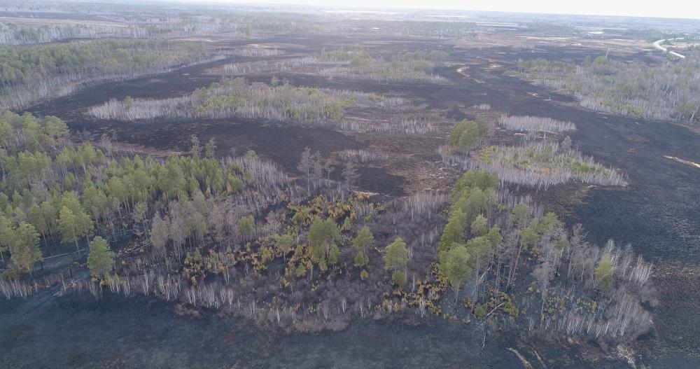 Массивные лесные пожары пылают в 14-ти областях Российской Федерации