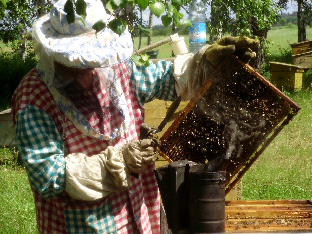 реальных пчеловоды амурской области фото для зрелого