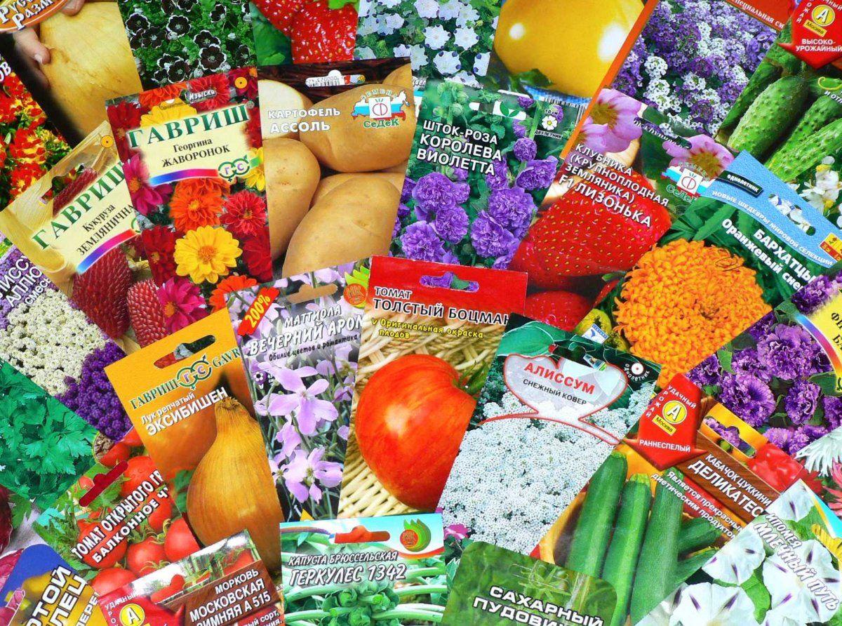 семена овощей в минске